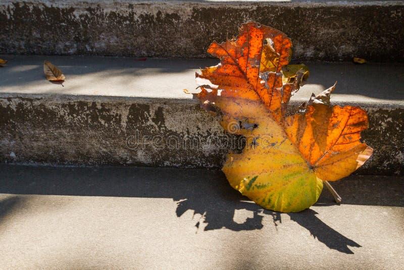 Le vecchie scale grige con il bello tek asciutto coprono di foglie sul pavimento con ombra stupefacente, la scena poetica ed il f fotografie stock