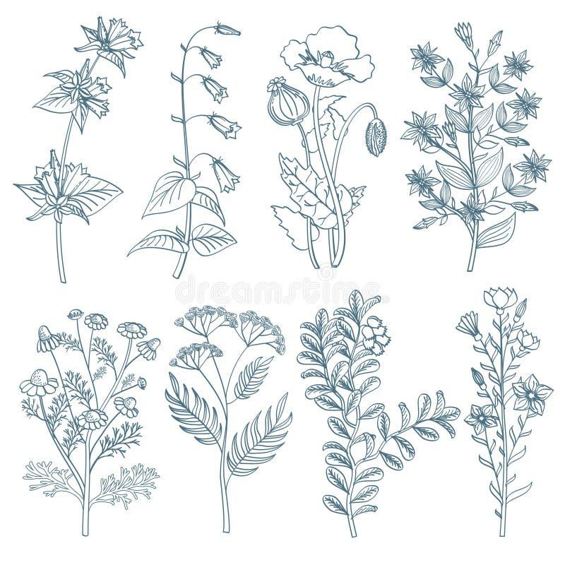 Le vecteur curatif organique médicinal botanique d'usines de fleurs sauvages d'herbes a placé à disposition le style dessiné illustration de vecteur