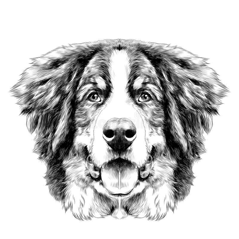 Le vecteur de croquis de chien de montagne de Bernese de tête de chien illustration stock