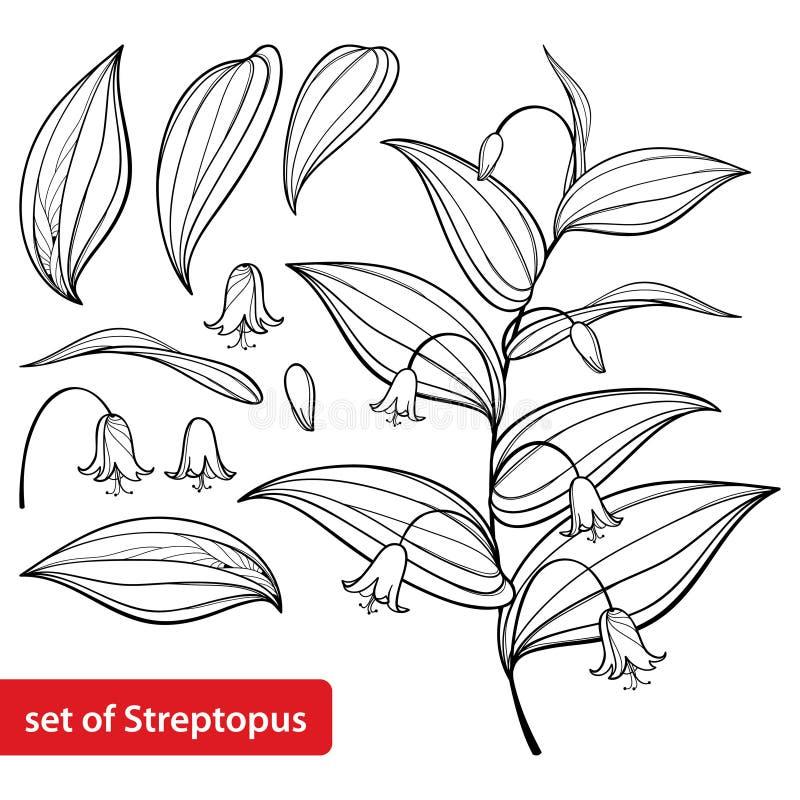 Le vecteur a placé avec le contour Streptopus ou a monté groupe tordu de fleur de tige et feuilles fleuries dans le noir d'isolem illustration stock