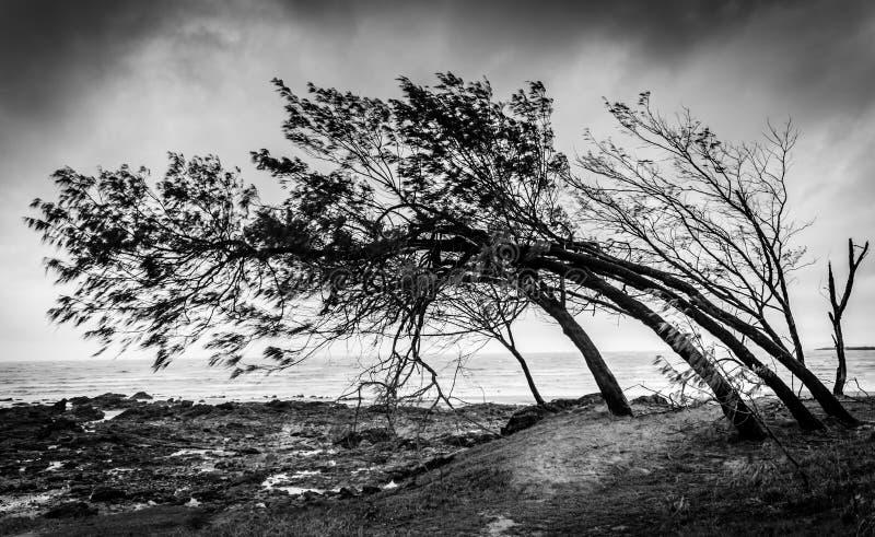 Le vent a balayé des arbres images stock