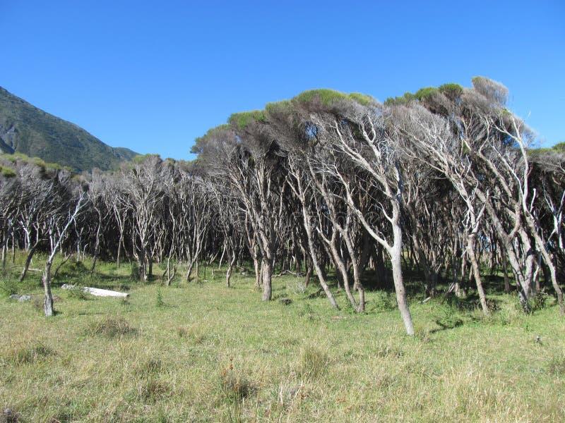 Le vent a balayé des arbres et des prairies photo stock