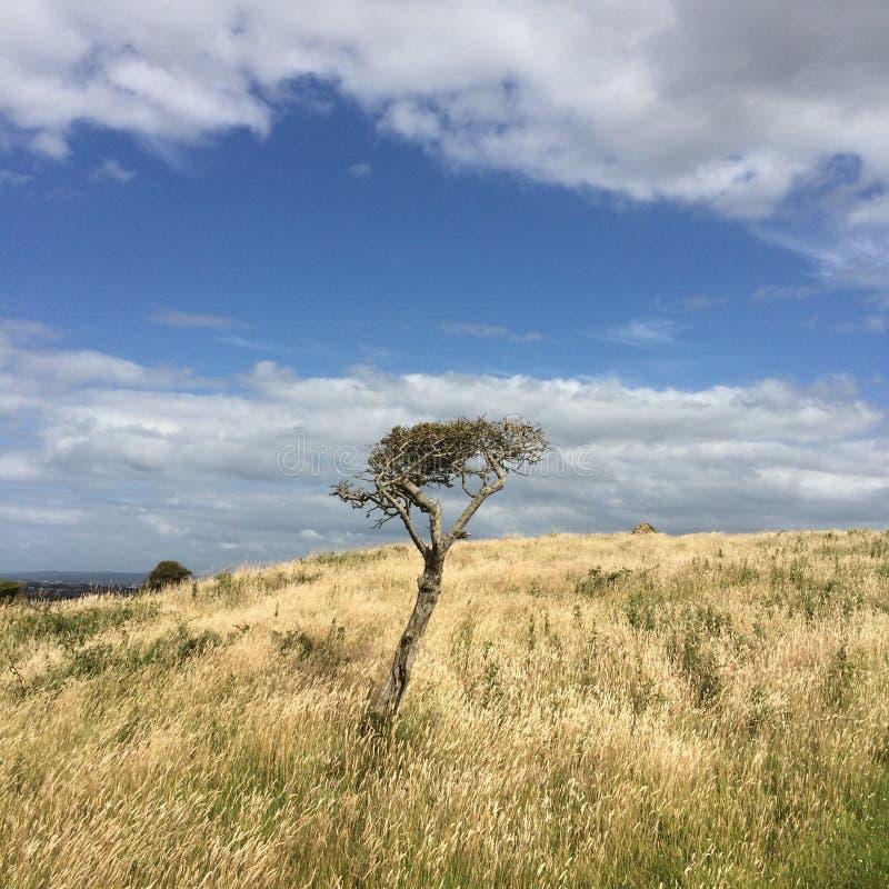 Le vent isolé a balayé l'arbre contre le vent images stock