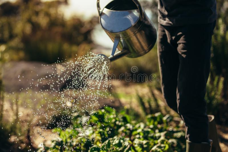Le verdure delle acque dell'uomo con la spruzzatura possono sull'azienda agricola fotografia stock libera da diritti