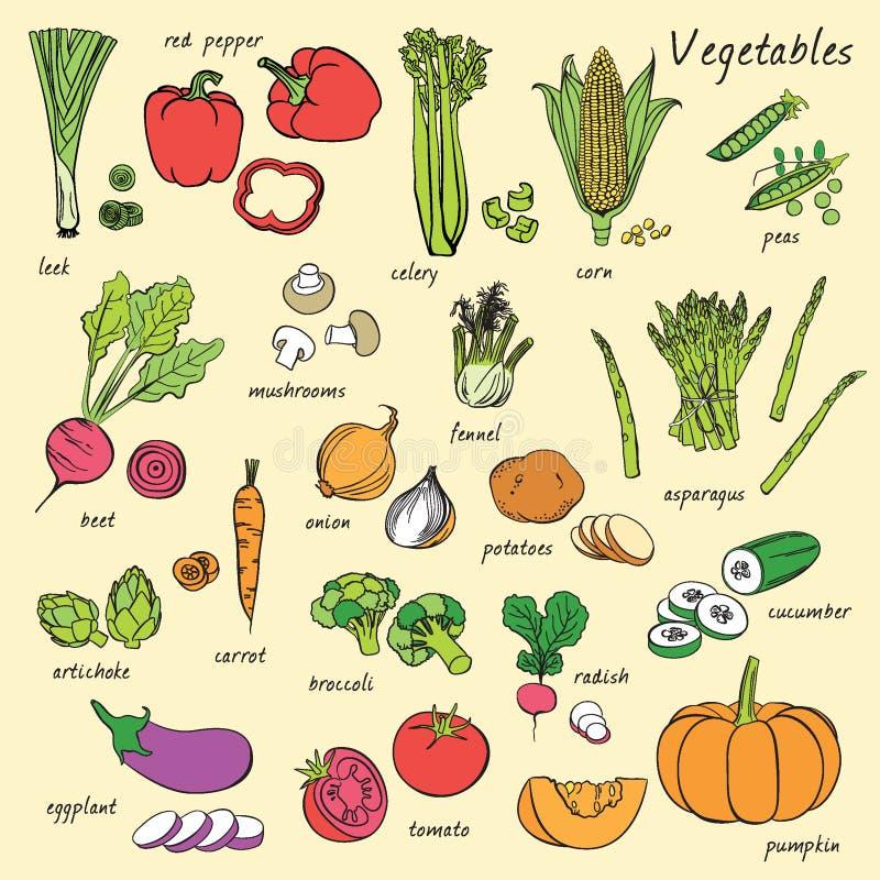 Le verdure di vettore hanno impostato immagine stock libera da diritti
