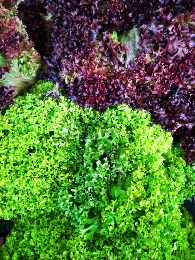 Le verdure si inverdiscono l'insalata fresca nella fine del mercato su fotografia stock libera da diritti