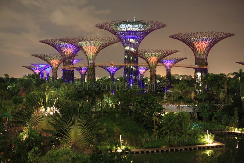 Le verger de Supertree la nuit, jardins par la baie, Singapour photo stock