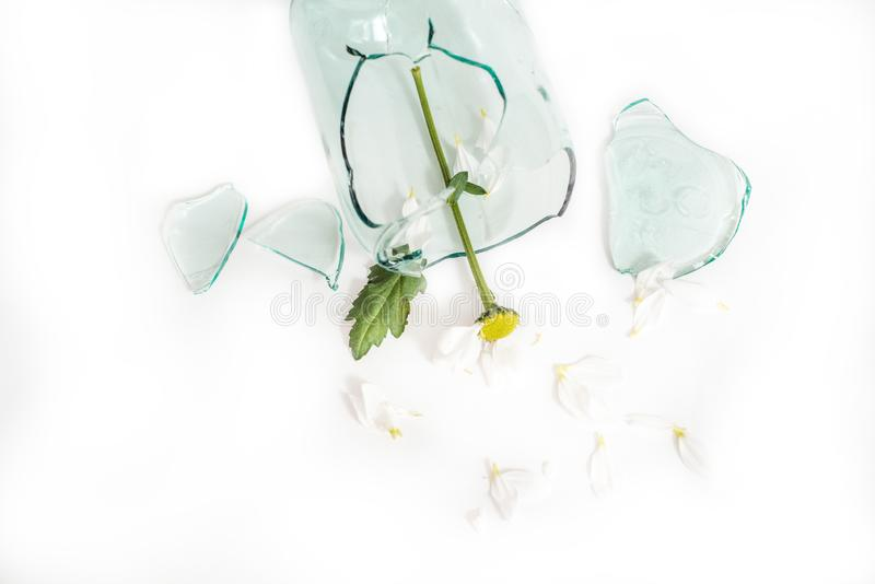 Le verre cassé, une fleur dans un vase cassé Le concept d'amour malheureux, de chagrin et de larmes photo libre de droits