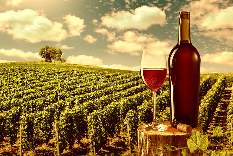 Le verre et la bouteille de vin rouge contre le vignoble aménagent en parc photos libres de droits