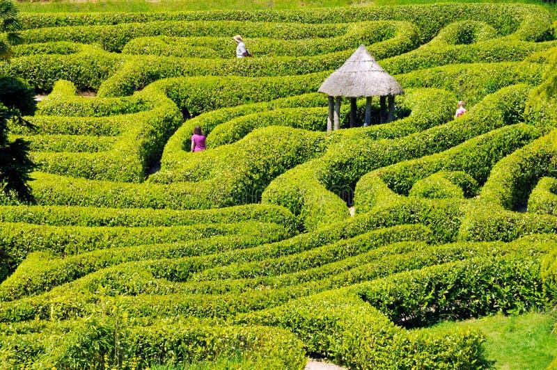 Le vert bague le labyrinthe, labyrinthe de haie photo libre de droits