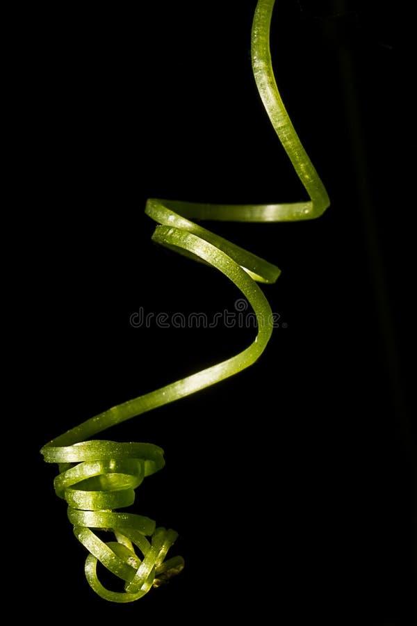 Le vert, brins de feuille a formé comme ressort image stock