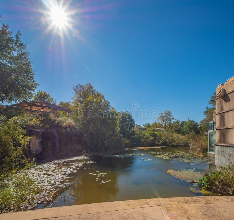 Le vert capitonne lilly le flottement dans un étang calme à côté du bâtiment photographie stock