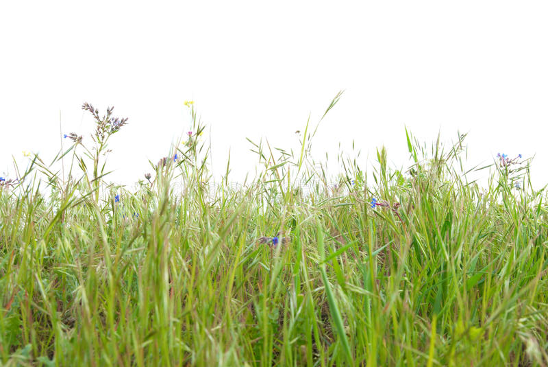 le vert d'herbe a isolé photographie stock