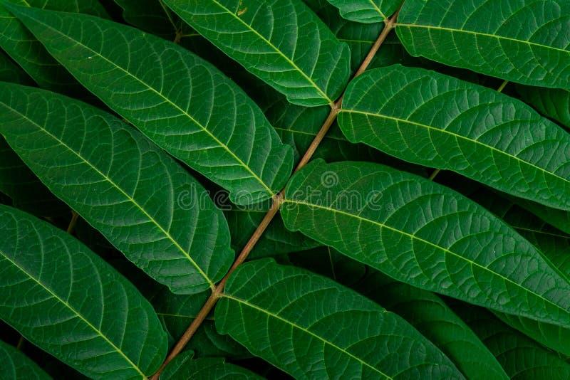 Le vert de la jungle tropicale laisse les veines en arrière-plan macro photo stock