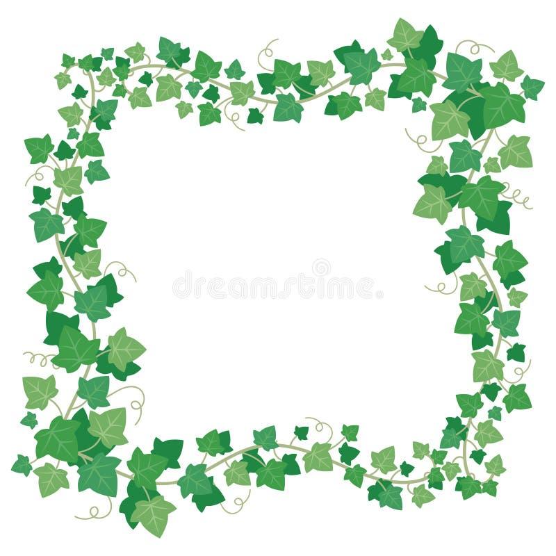 Le vert de lierre de vigne laisse le cadre Frontière rectangulaire s'élevante de verdure d'usine Vecteur d'isolement par feuille  illustration libre de droits
