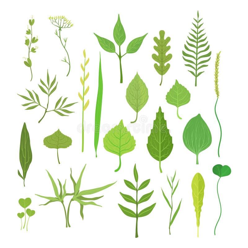 Le vert frais part des arbres, des arbustes et de l'ensemble d'herbe pour la conception de label La nature et l'écologie, bande d illustration libre de droits
