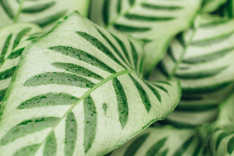 Le vert juteux de contraste laisse le fond photographie stock