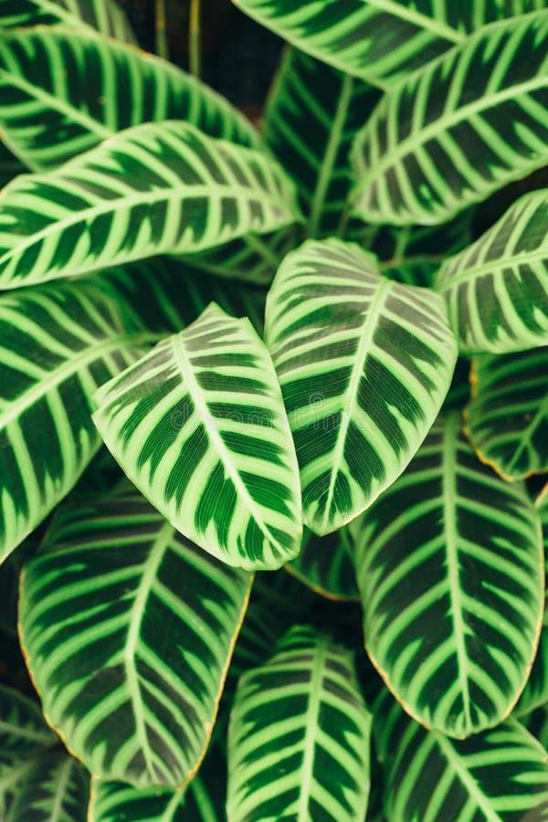 Le vert juteux de contraste laisse le fond photo stock