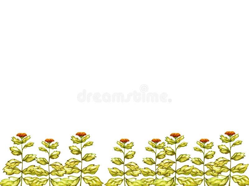 Le vert laisse des fleurs de calendula l'aquarelle dessinée encadrée par décoration orange d'ornement de nature d'éléments d'isol illustration stock