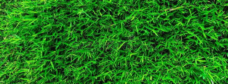 Le vert laisse le fond en bambou de texture image libre de droits