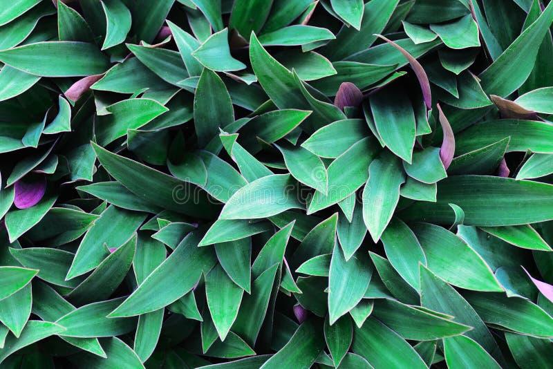 Le vert laisse le fond Utilisation pour l'élément de papier peint, de contexte ou de conception dans le concept naturel photographie stock