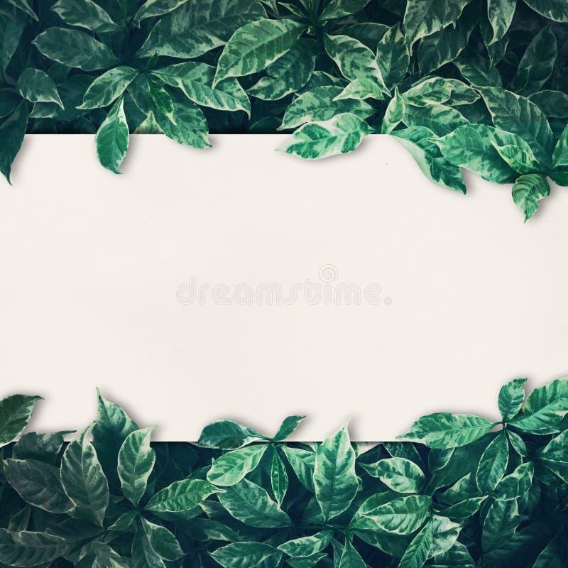 Le vert laisse la conception de fond avec le livre blanc images stock