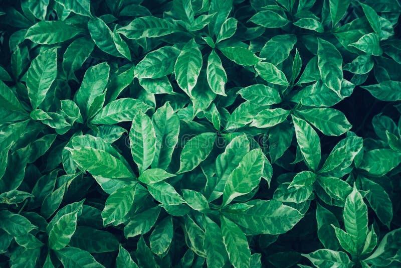 Le vert laisse la conception de fond Configuration plate Vue supérieure de feuille nature images libres de droits
