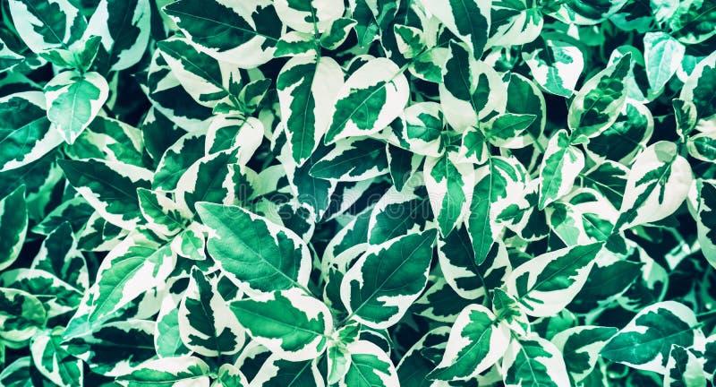 Le vert laisse la conception de fond Configuration plate Vue supérieure de feuille nature photographie stock libre de droits