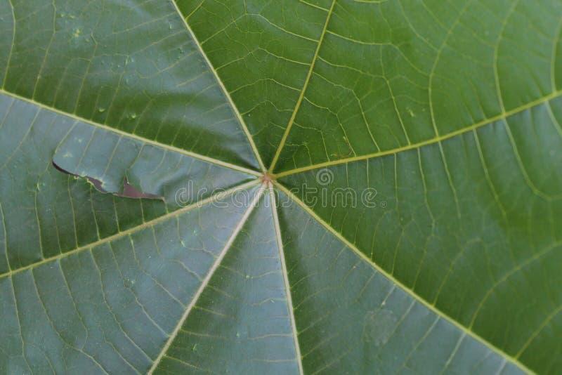 Le vert laisse la toile d'araignée rayée image stock