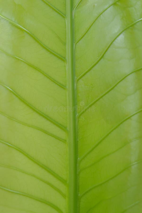 Le vert laisse le fond de texture photos libres de droits