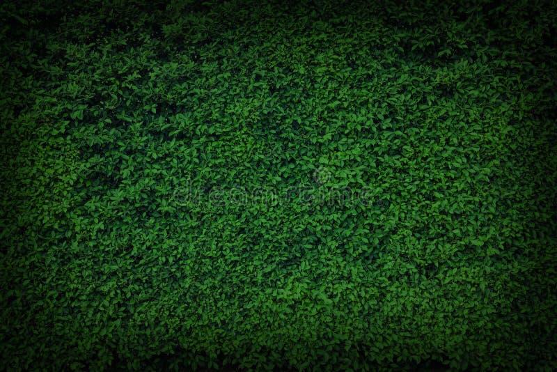 Download Le Vert Laisse Le Mur Naturel Photo stock - Image du centrale, jardin: 87702590