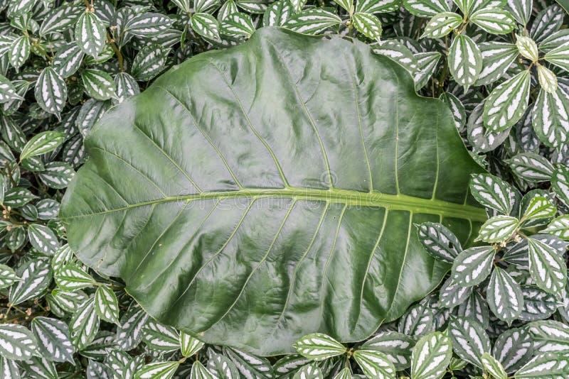 Download Le vert laisse le plancher photo stock. Image du beau - 76088130