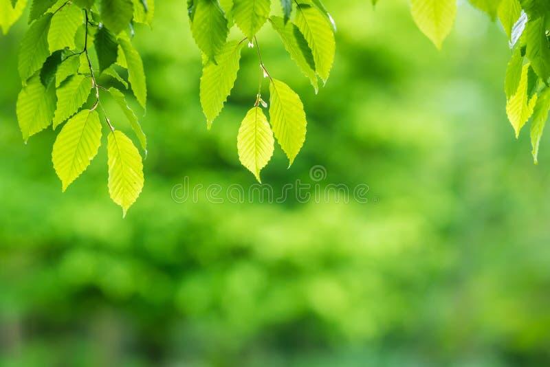 Le vert laisse le recouvrement de fond image libre de droits