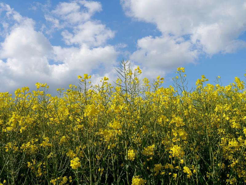Le vert met en place la forêt Allemagne d'usines de nature du soleil d'été images libres de droits