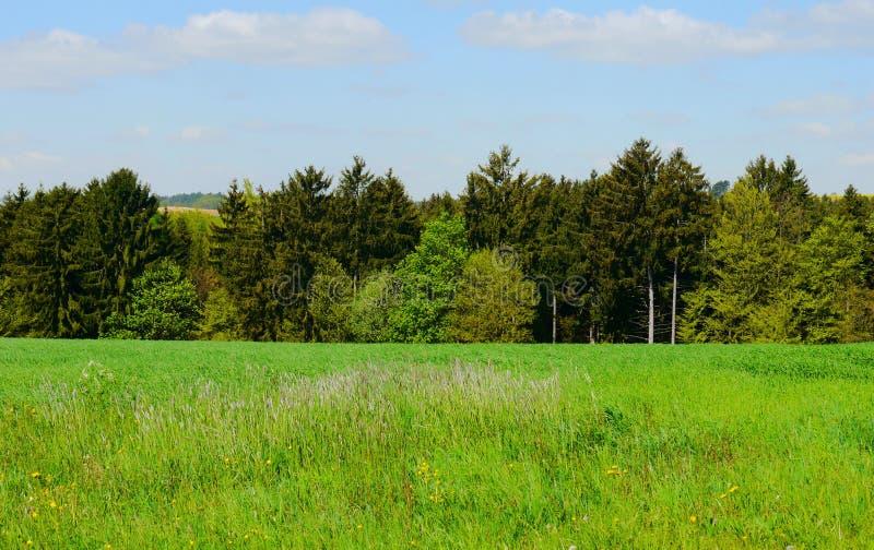 Le vert met en place la forêt Allemagne d'usines de nature du soleil d'été photo stock
