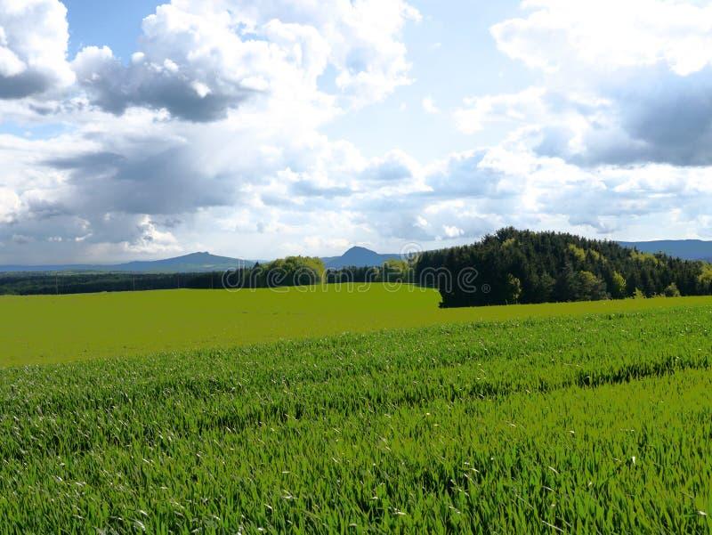 Le vert met en place la forêt Allemagne d'usines de nature du soleil d'été images stock