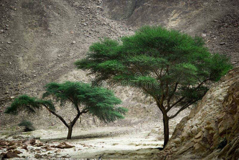 Le vert parmi le désert photographie stock libre de droits