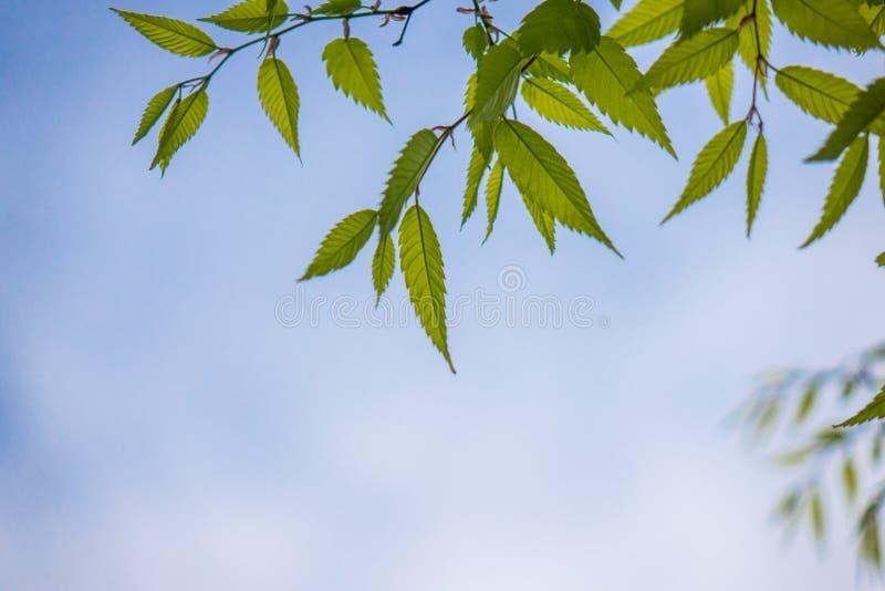 Le vert part contre le ciel dans une forêt photographie stock