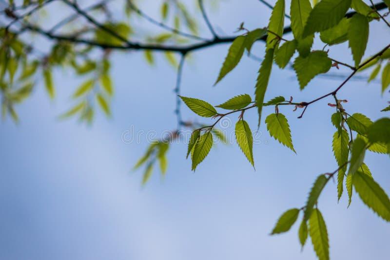 Le vert part contre le ciel dans une forêt photo stock