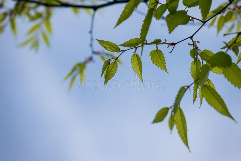 Le vert part contre le ciel dans une forêt photos stock