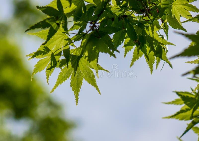 Le vert part contre le ciel dans une forêt image stock