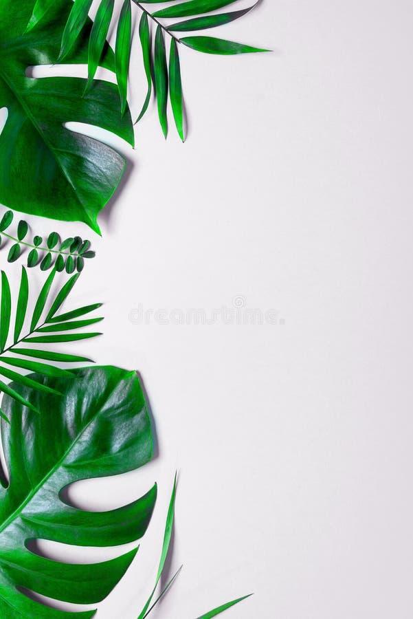 Le vert tropical laisse des frondes de paume d'isolement sur le fond blanc la configuration d'appartement, vue supérieure image stock