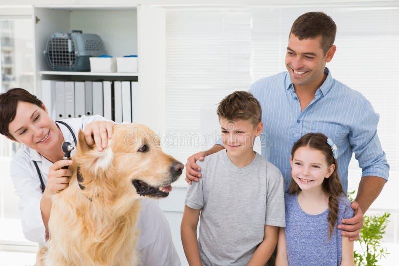 Le veterinären som undersöker en hund med dess ägare royaltyfria foton