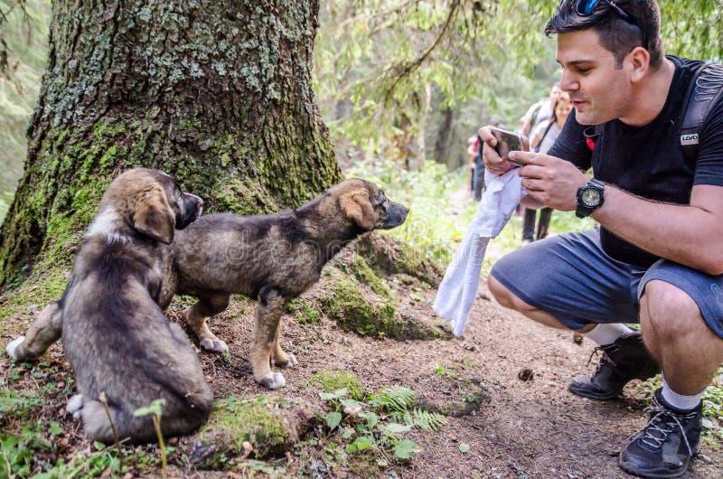 Le viandanti ci amano, cuccioli fotografia stock libera da diritti