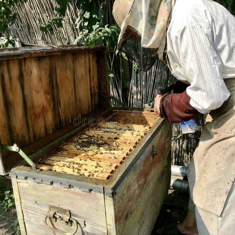 Le vieil apiculteur première génération travaille à son propre rucher rural photo stock