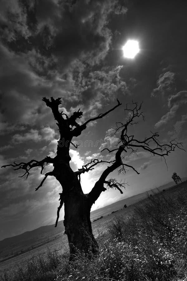 Le vieil arbre photo stock