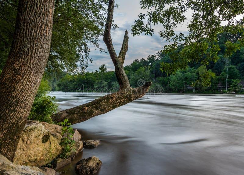 Le vieil arbre accroche au-dessus de la large rivière française photo stock