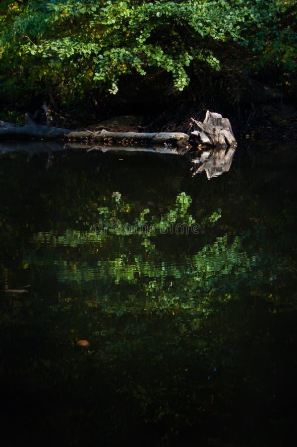 Le vieil arbre en rivière comme un miroir photo libre de droits