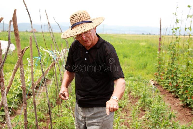 Le vieil homme de fermier explique comment cultiver photo stock