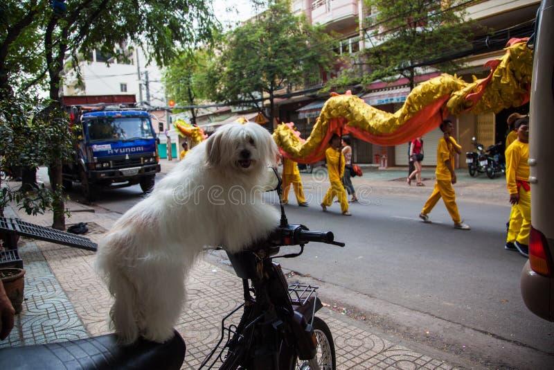 Le Vietnam - 22 janvier 2012 : Les regards de chien à la danse de dragon An neuf vietnamien images stock